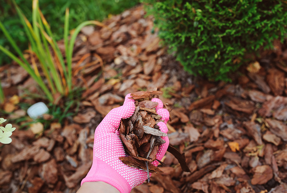 pink gloved hand holding mulch