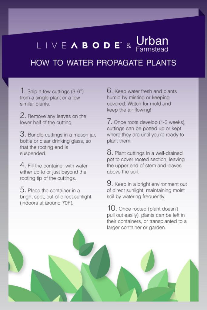 plant chart