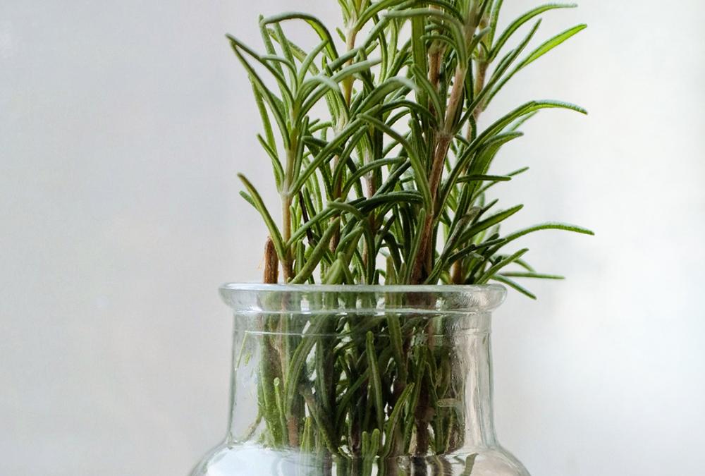 rosemary in jar