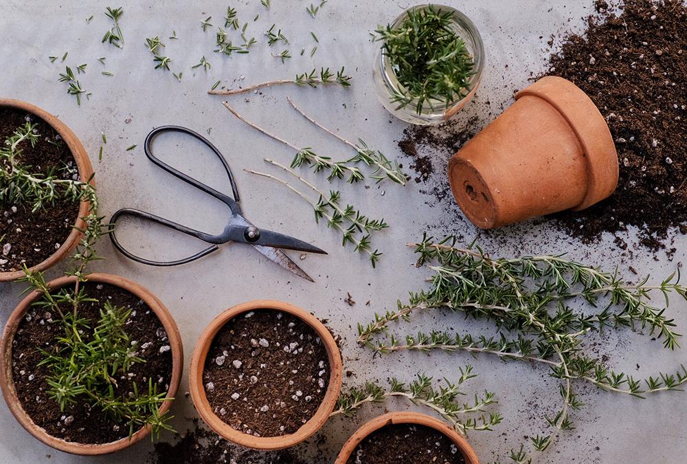 multiple plant pots