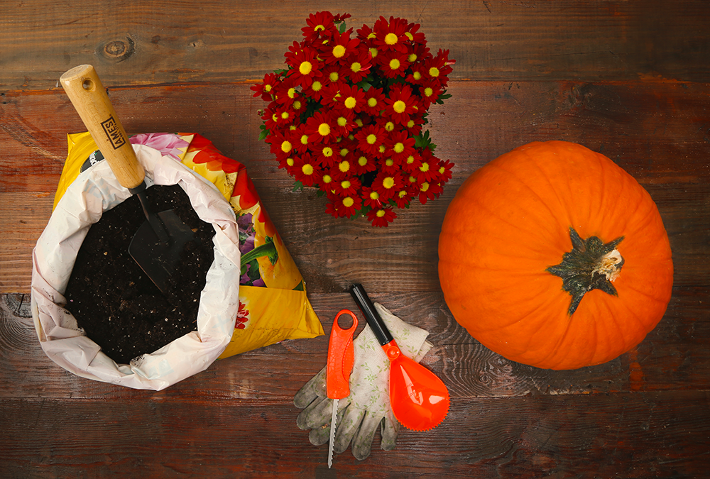 pumpkin potting supplies
